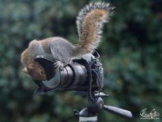 scoiattloli-1_MGTHUMB-BIG